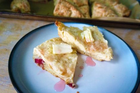 A rhubarb buttermilk scone, split in half, rests on a small plate, small pats of butter melting on each upturned face. A pale pink syrup is drizzled over both halves. In the background, we see the rest of the pan of scones, waiting.
